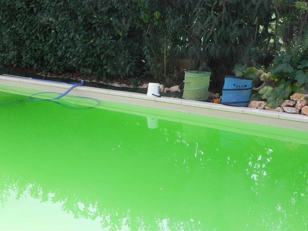 Esempio Acqua Piscina Verde